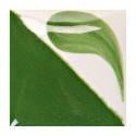 CN172 - Vert varech vif