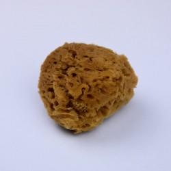 EP03 - Eponge naturelle Ø 5,5 cm